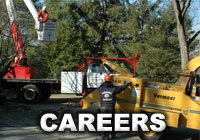 Careers with Weston Arborists